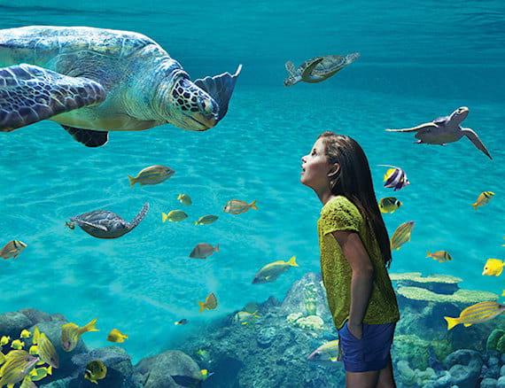 Aaa Car Loans >> SeaWorld® San Diego