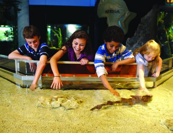 picture relating to Mystic Aquarium Printable Coupons known as Mystic Aquarium