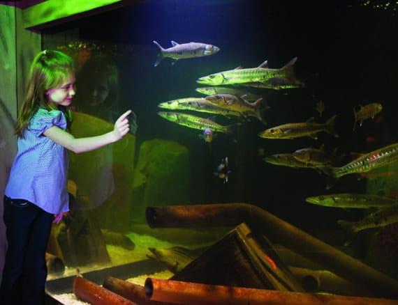 photograph relating to Mystic Aquarium Printable Coupons named Mystic Aquarium