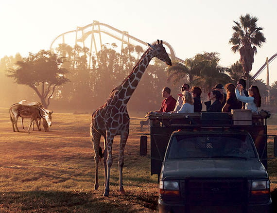 Busch Gardens® Tampa ...