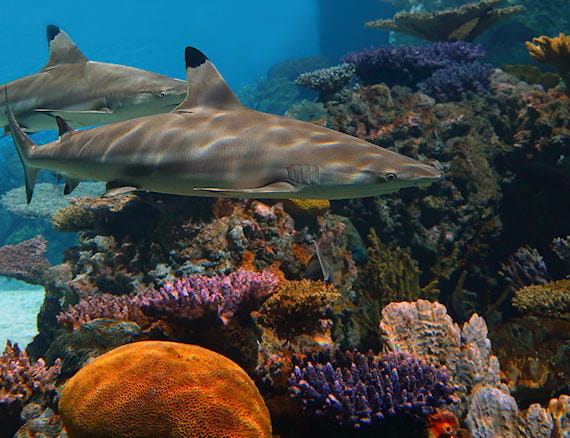 Aaa Car Loans >> National Aquarium