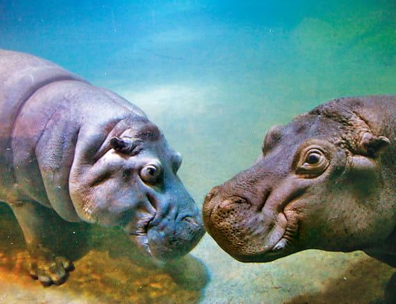 Image result for adventure aquarium