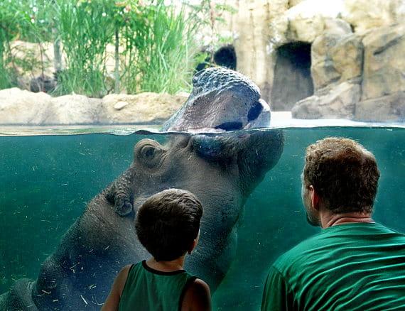 Aaa Car Loans >> Cincinnati Zoo and Botanical Garden