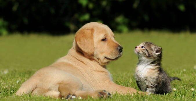 Puppy and Kitten Sitting in Grass