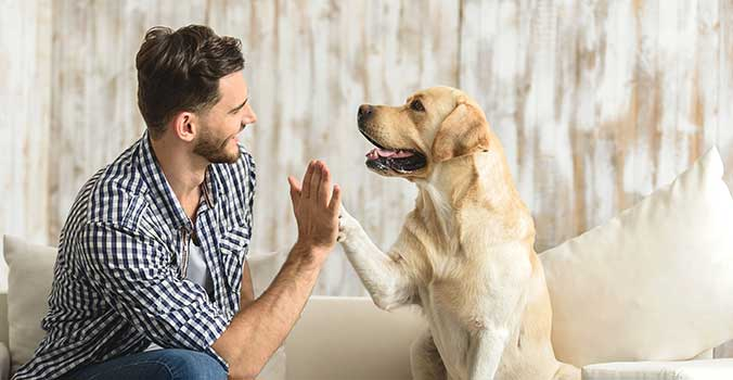 Man high fiving with dog