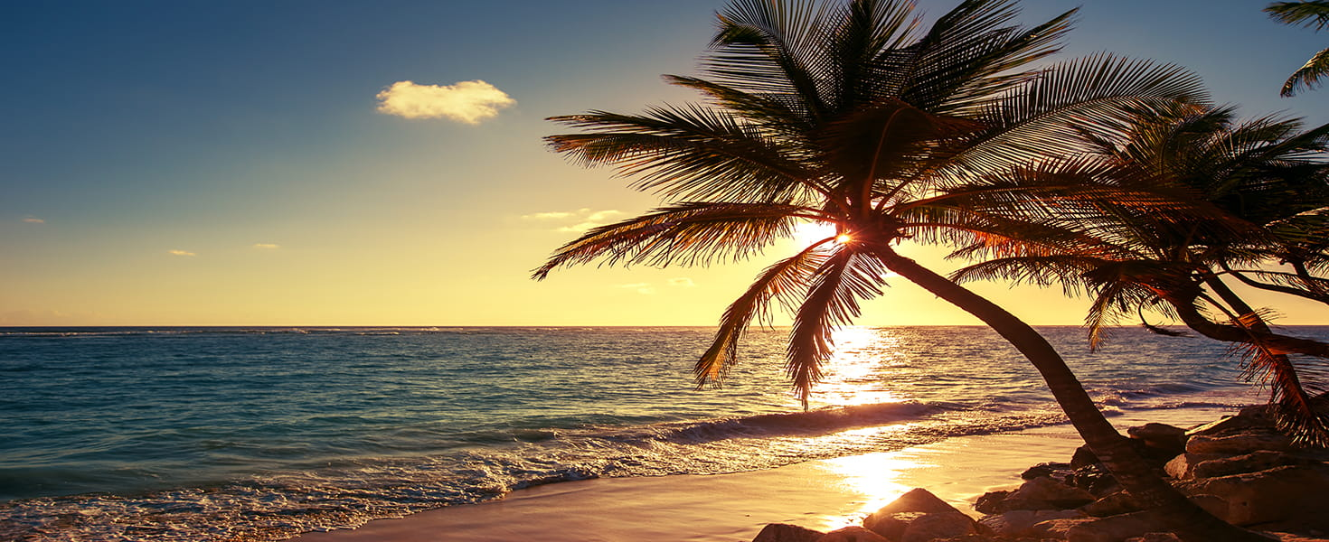A palm tree at sunset on a tropical beach