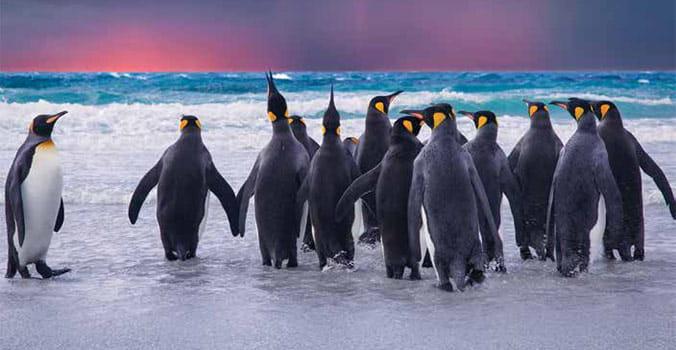 Princess Cruises: South America Cruises – Antarctica Cruises