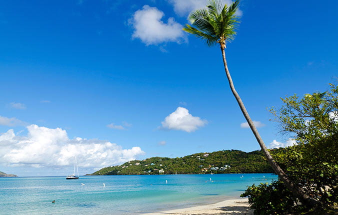 Beach and palm tree in St Thomas