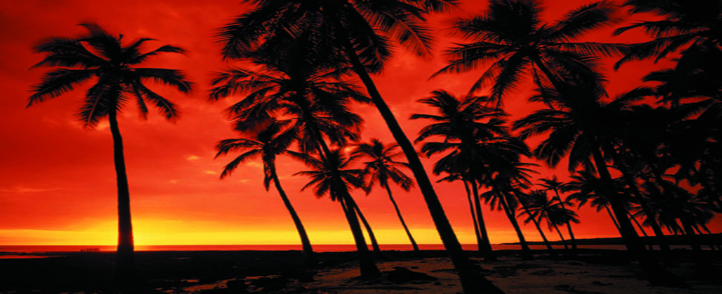 Palm Trees at Sunset on beach in Hawaii