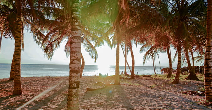 Caribbean sea at sunset, with white beaches and coconut palms